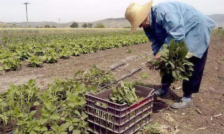 Άρτα: Πικρή η «γεύση» από την εφαρμογή της ΚΑΠ για την πλειοψηφία της μικρομεσαίας αγροτιάς