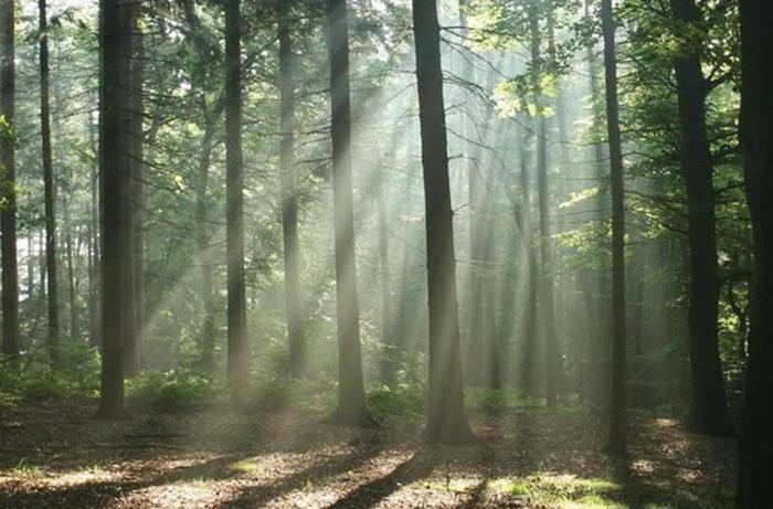 Άρτα: Μήνυμα της Διεύθυνσης Δασών Άρτας για την Παγκόσμια Ημέρα Δασοπονίας