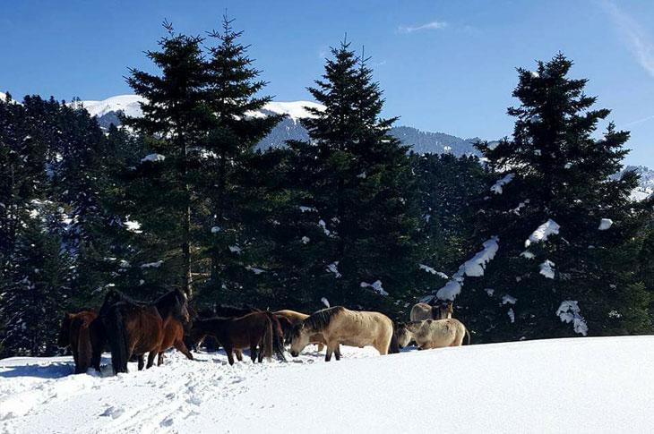 Άρτα: Βράβευση για την διάσωση των 21 αλόγων στο Γράβογο