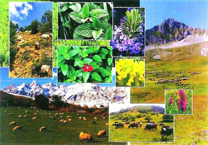 Άρτα: Δήμος Γ. Καραϊσκάκη - Ενημερωτική εκδήλωση με θέμα «Νέοι Αγρότες-Υποδομές στα ορεινά βοσκοτόπια»