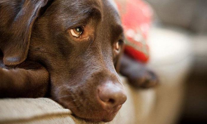 Δήμος Αρταίων: Ποινικό αδίκημα η εγκατάλειψη δεσποζόμενων ζώων συντροφιάς