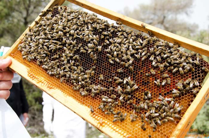 Άρτα: Σεμινάριο μελισσοκομίας για αρχάριους και νέους μελισσοκόμους
